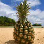 西表島パイナップルのすすめ