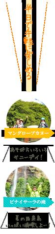 西表島マングローブカヌーショートコース(半日)ツアー