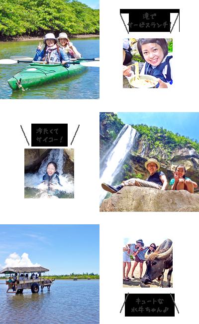 西表島マングローブカヌー&由布島水牛車観光写真