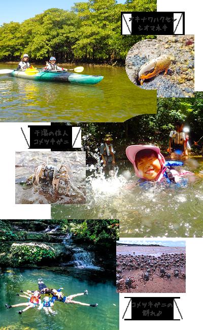 西表島マングローブカヌー&滝遊びファミリーツアー写真