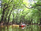 西表島マングローブ写真