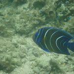 星砂ビーチの魚たち