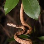 右利きのヘビ